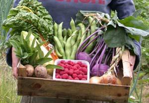 Ecoworks Veg Box